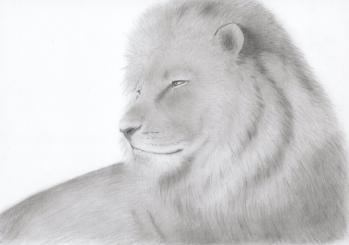 ライオン110509003