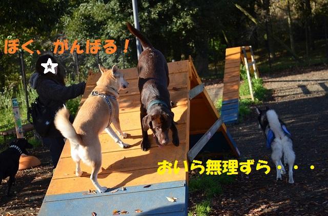 11_17_33.jpg