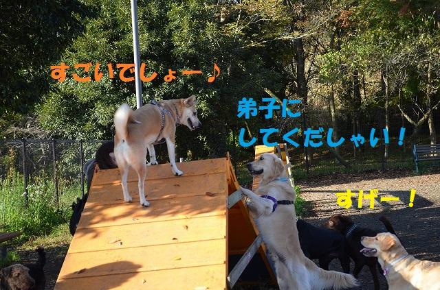 11_17_35.jpg