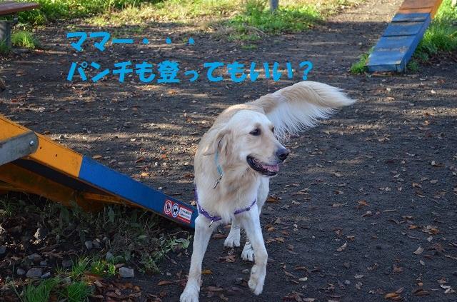 11_17_36.jpg