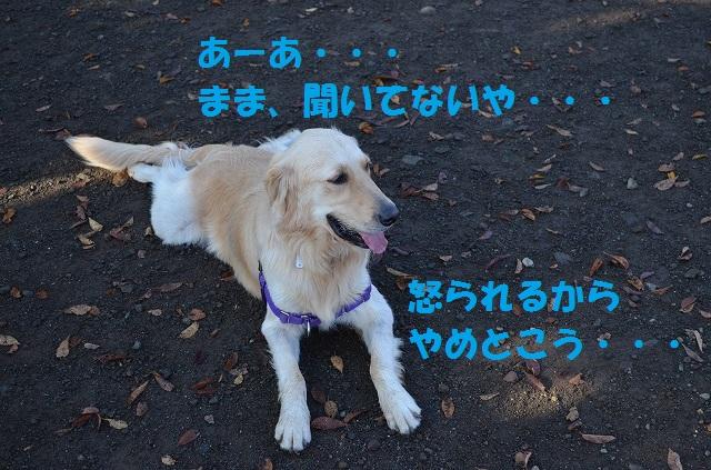 11_17_37.jpg