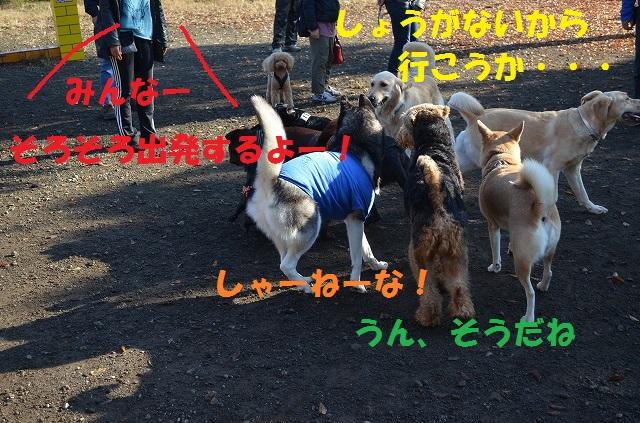 11_17_40.jpg