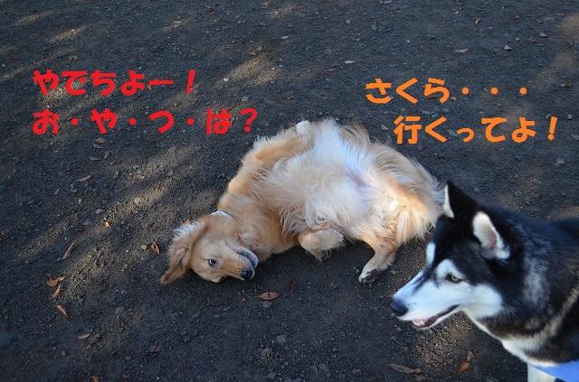 11_17_41.jpg