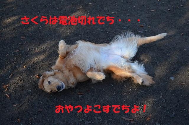 11_17_42.jpg