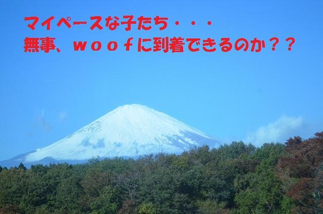 11_17_45.jpg