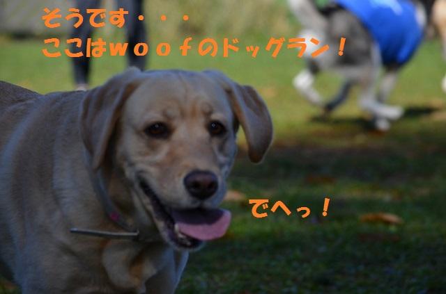 11_17_53.jpg