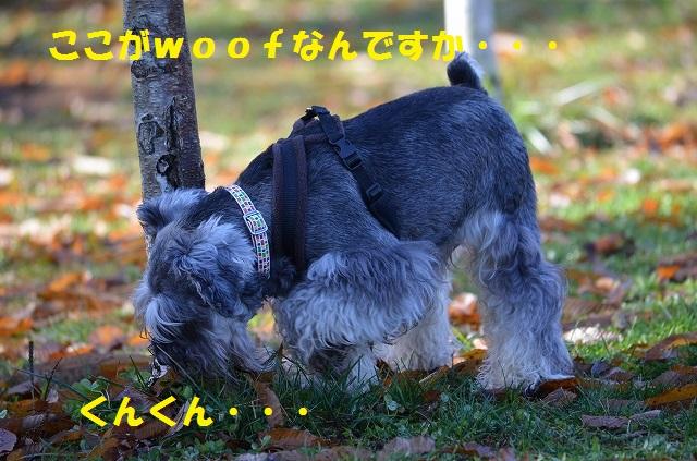 11_17_54.jpg