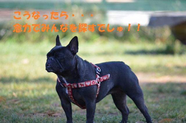 11_17_61.jpg