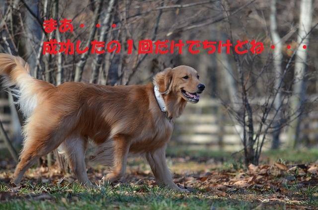11_17_84.jpg