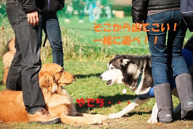 woof11_17_8.jpg
