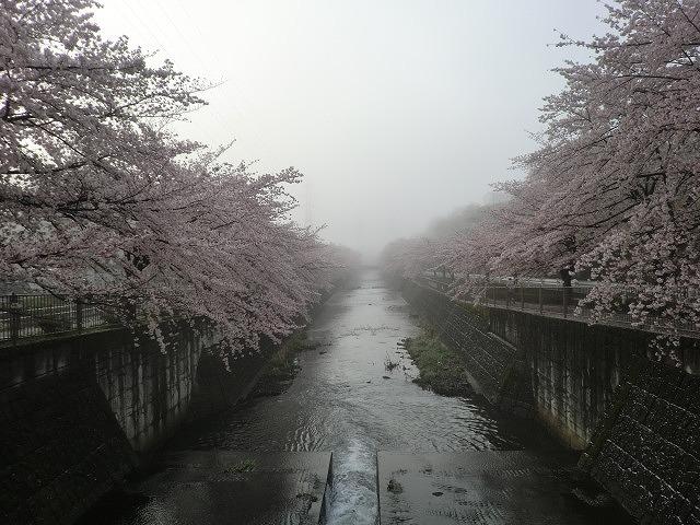 桜 002