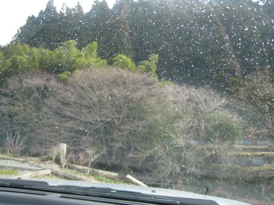 yamayurisou_snow
