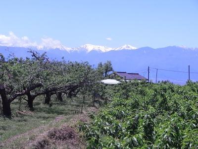 3桃畑と山
