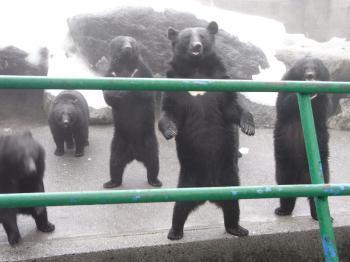 クマその1