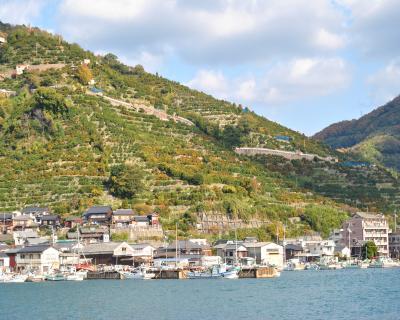 みかん山(八幡浜)