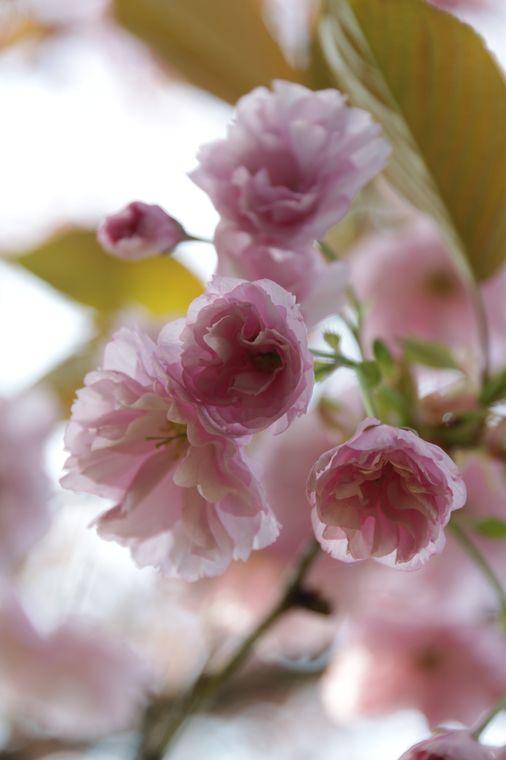 14April2011-02.jpg