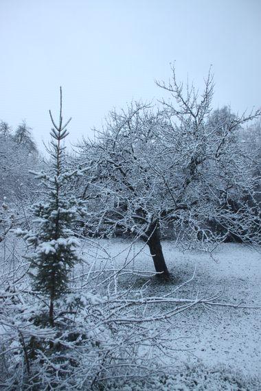 26November2010-01.jpg