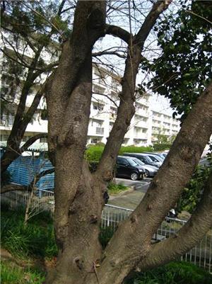 その木になってblog01