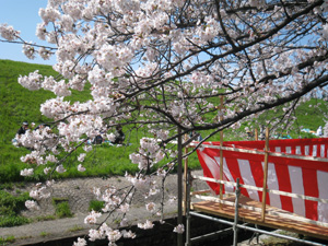 2010.4.4花見blog01