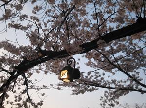 2010.4.4花見blog03