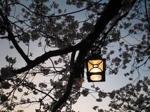 2010.4.4花見blog04