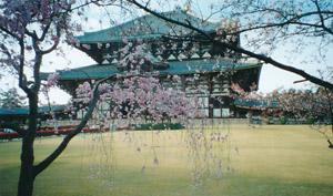 2010.4.9東大寺blog02