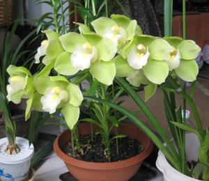 2010.5.9蘭blog01
