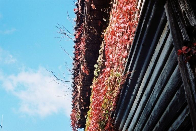 鳳来寺の廃屋 FH005