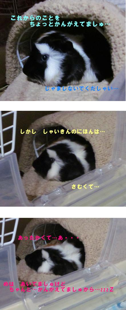 IMG_4829.jpg