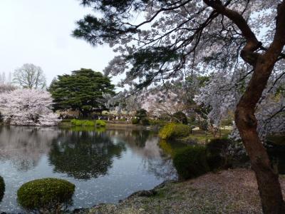 新宿御苑桜③4.10