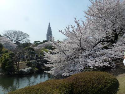 新宿御苑桜②4.10