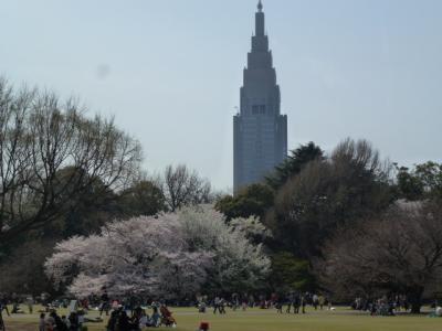 新宿御苑桜①4.10