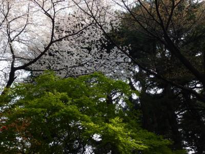 桜ともみじ4.7
