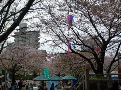 飛鳥山桜4.13
