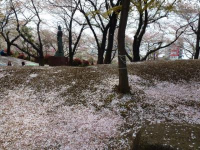 桜散っています。飛鳥山4.13