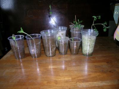 挿し木と種まき