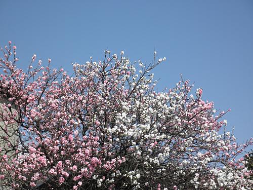 20100403花