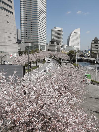 20100408桜②
