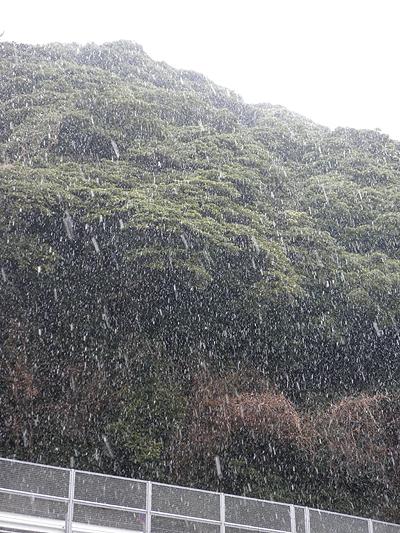 20110211雪
