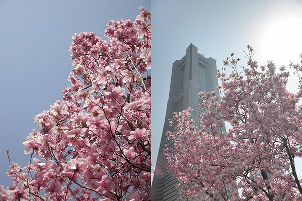 20110402花①