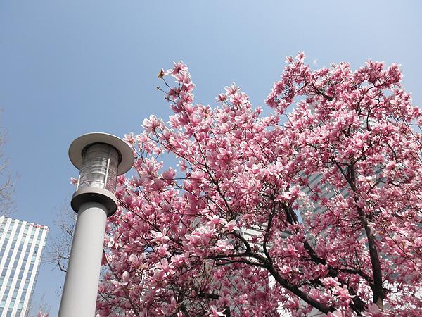20110402花③