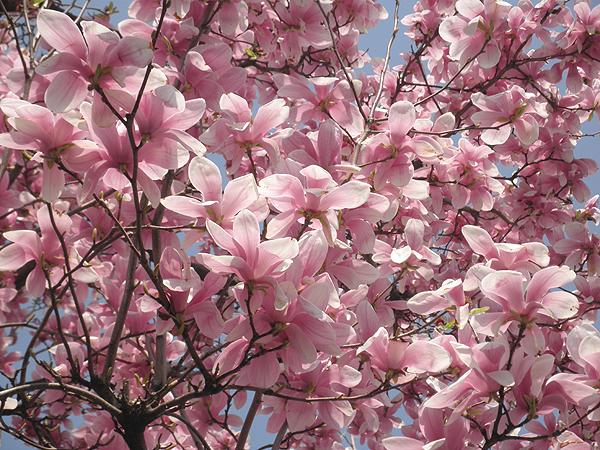 20110402花②