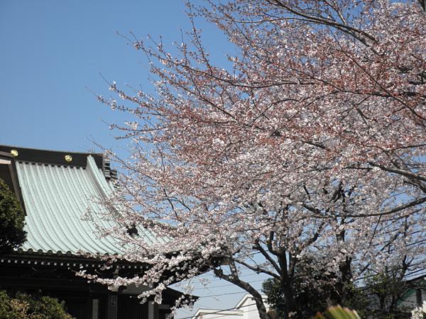 20110406桜②