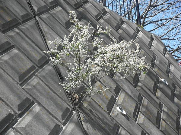 20110406コンクリート花