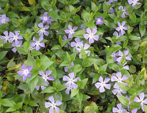 20110411花①