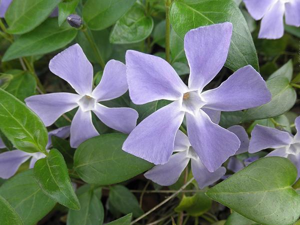 20110411花②