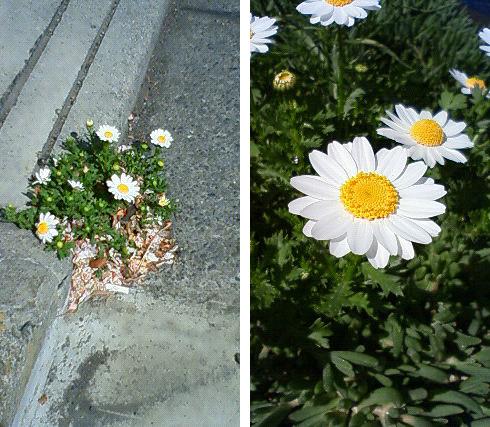 20110414花-携帯