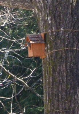 993a鳥の巣3月
