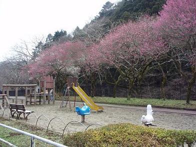 駒木野公園2