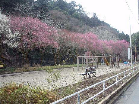駒木野公園3